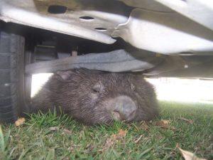 100_8745 Under car at Edgeworth